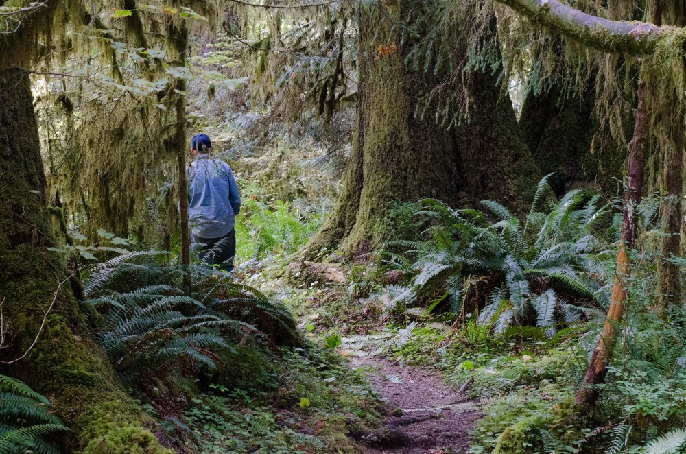 rain forest 035