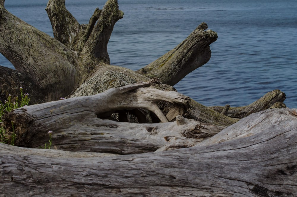 Whidbey 016