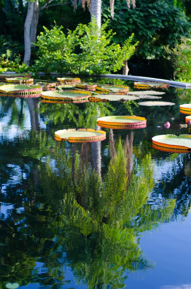 botanical gardens 025