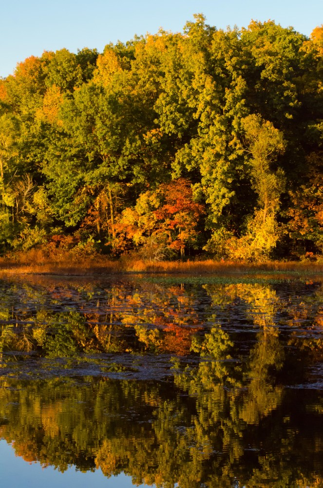 Early color reflected in Concord Millpond