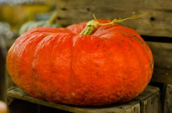 heirloom pumkin