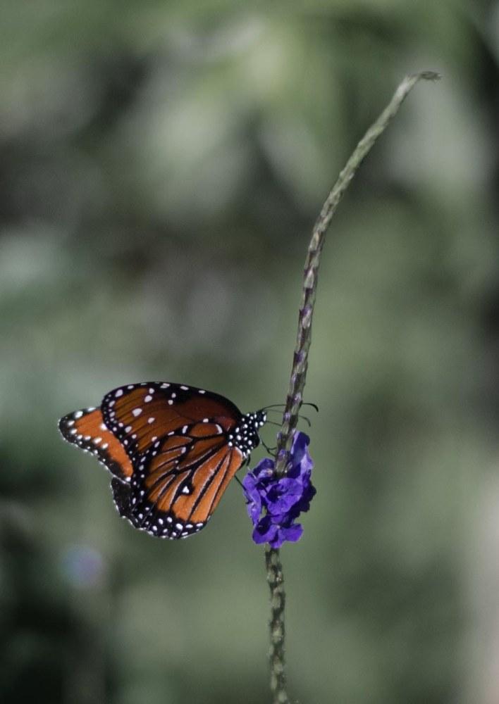 botanical 049