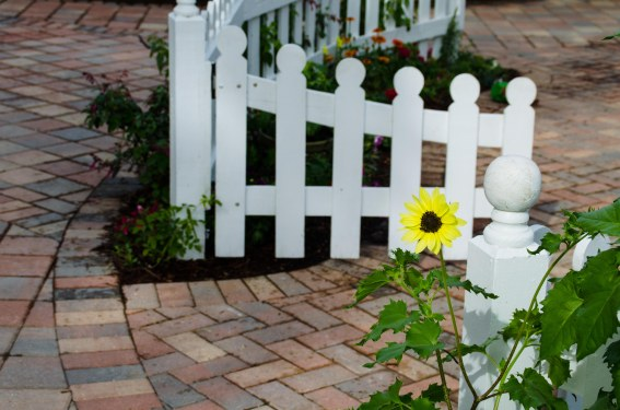 Short gates with a short sunflower.