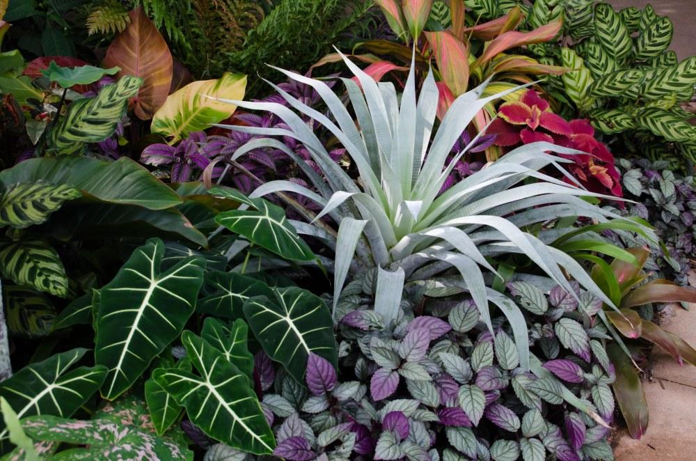 botanical garden 243