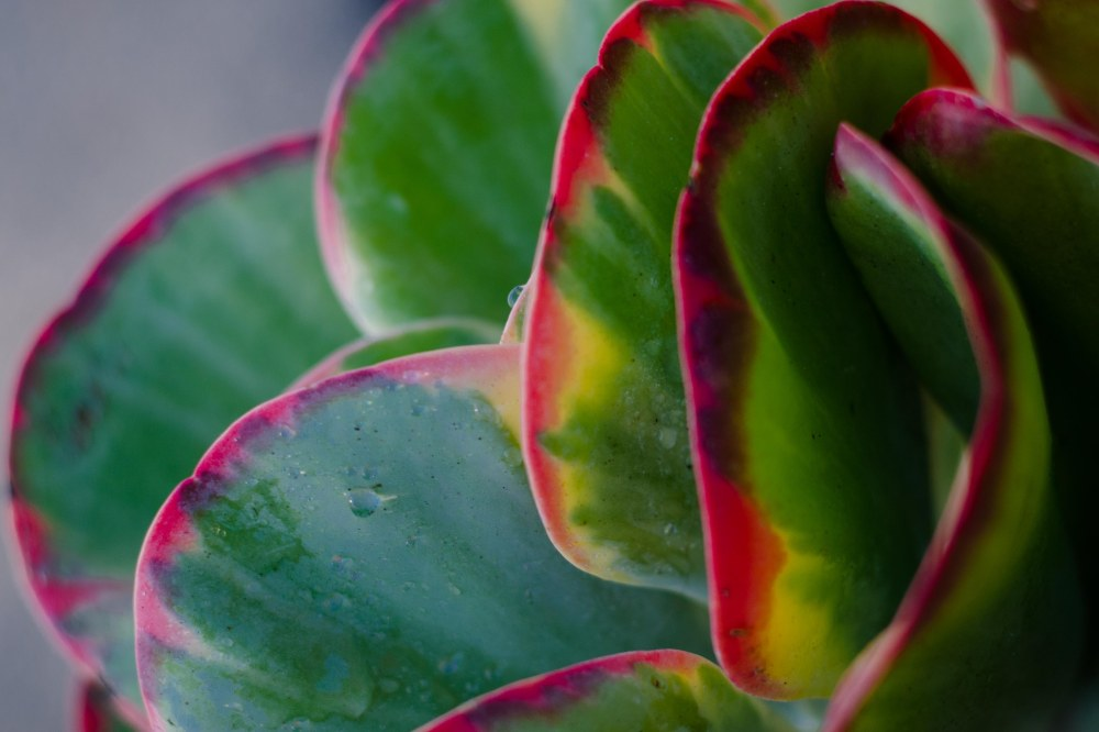 botanical gardens 008