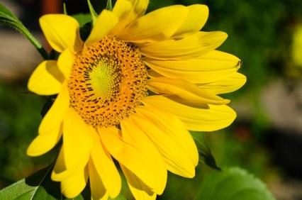 Flowers at eyeball level.