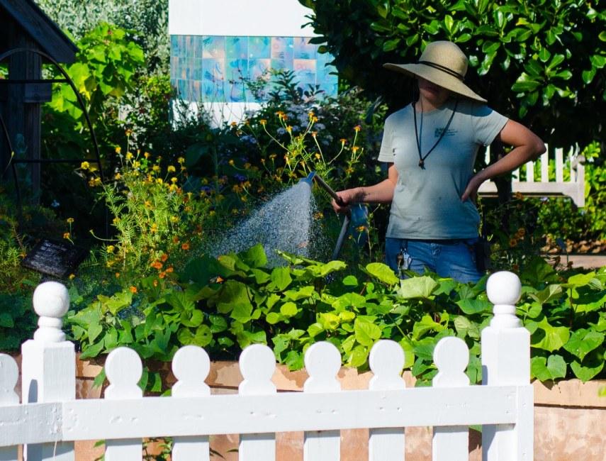 botanical gardens 307