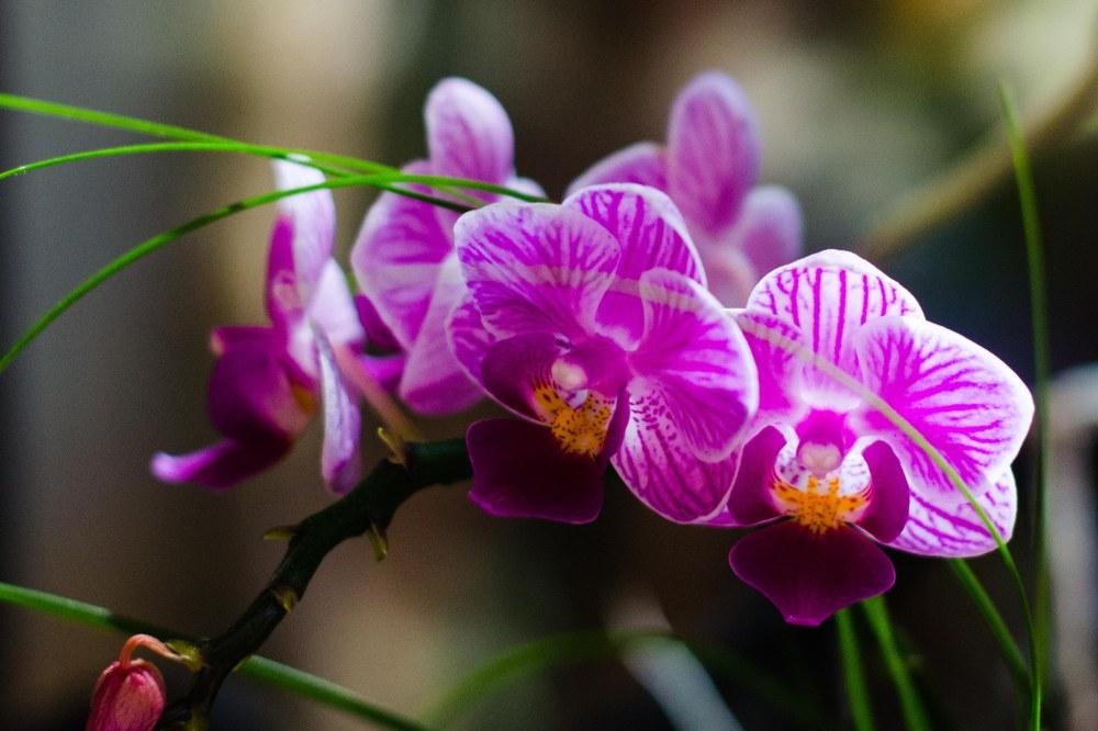 botanical gardens 395