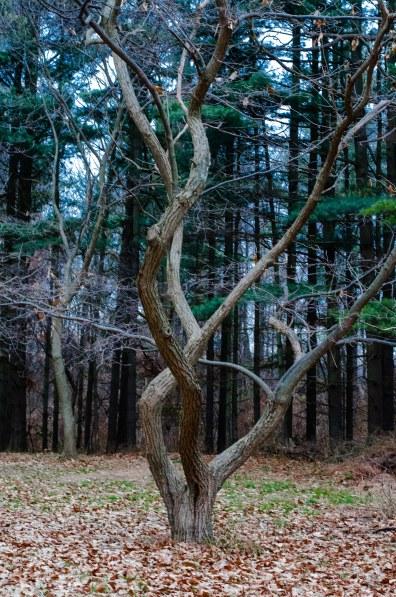 winter woods 094