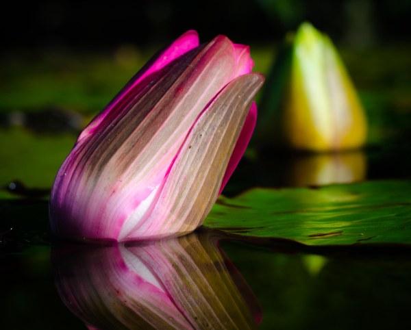 botanical 017