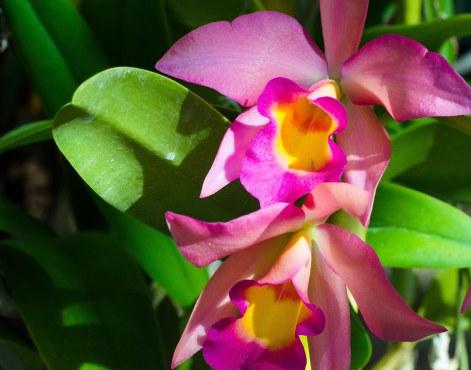 botanical 181