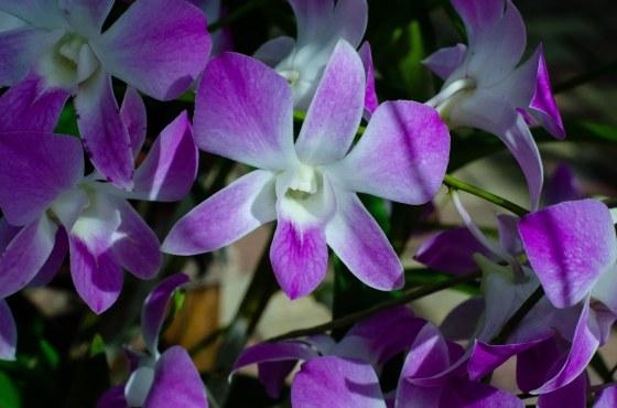 botanical 183