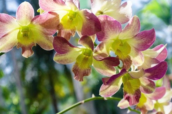 botanical 186