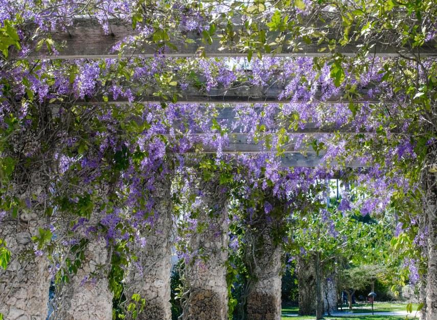 botanical garden 074