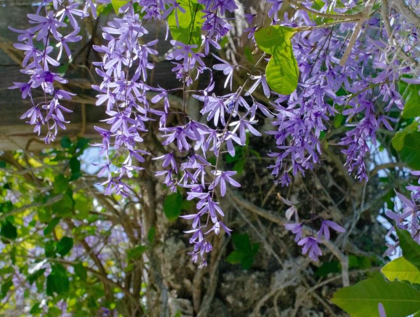 botanical garden 081