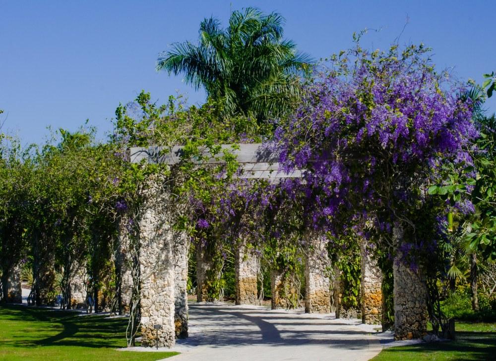 botanical garden 100
