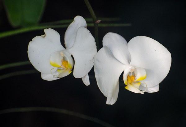 botanical gardens 006