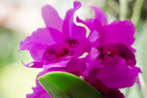 botanical gardens 328