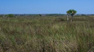Grassland prairie along US 41.