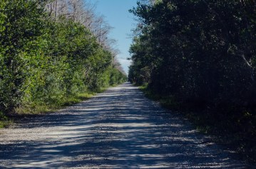 One-lane road (off US 41) through the Everglades.