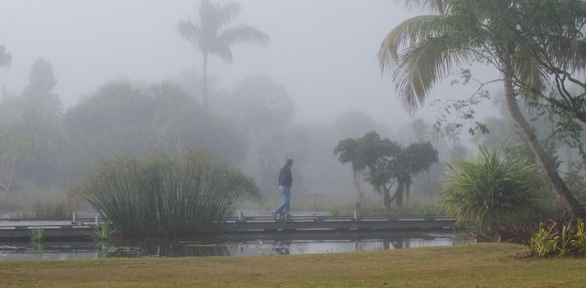 garden mist 004