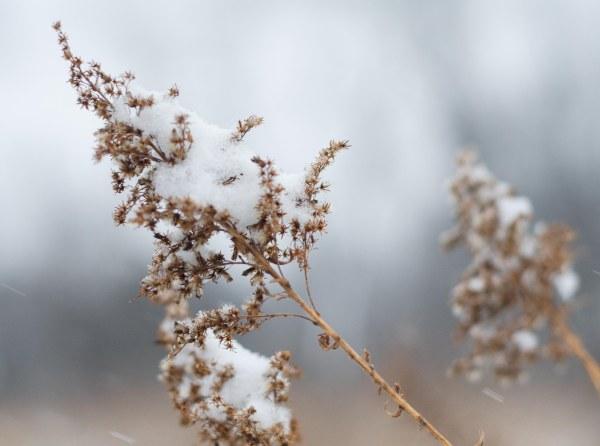 Snow upon snow.