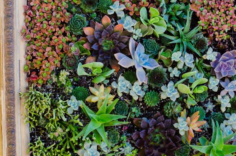 botanical garden 057
