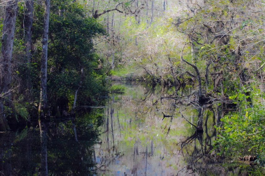 Everglades 015