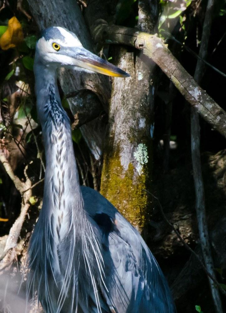 Everglades 025-2