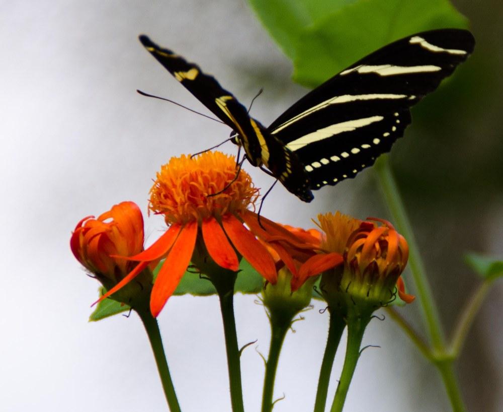 botanical garden 031-2