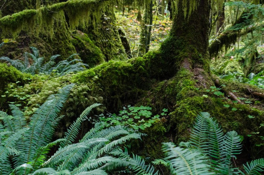 rain forest 024
