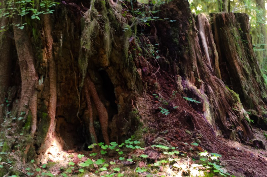 rain forest 055