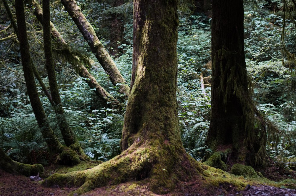 rainforest 085