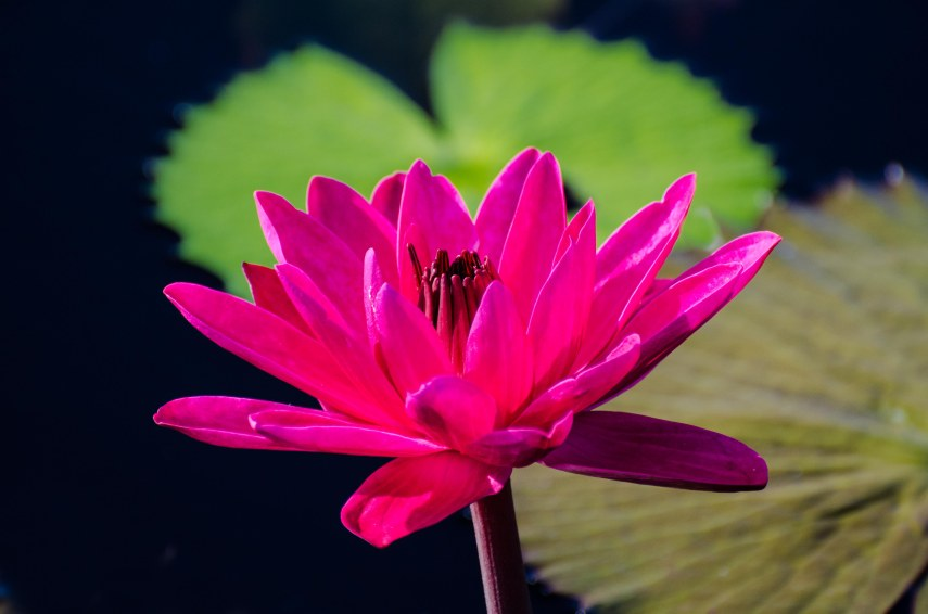botanical gardens 061