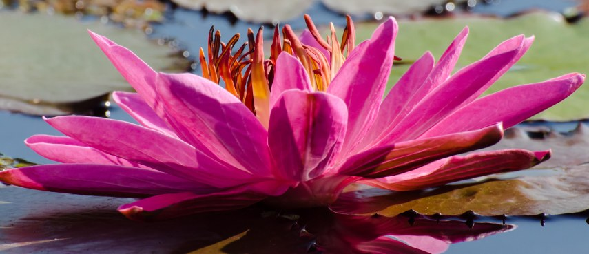 botanical gardens 097