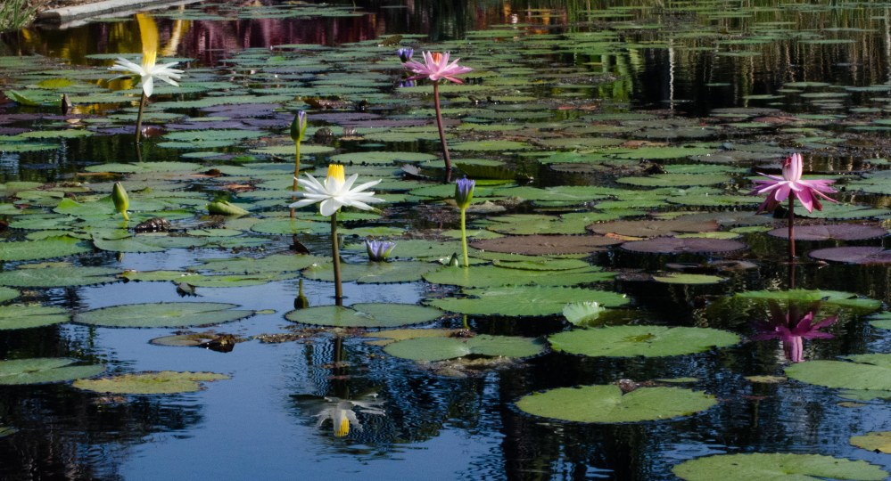 botanical gardens 102