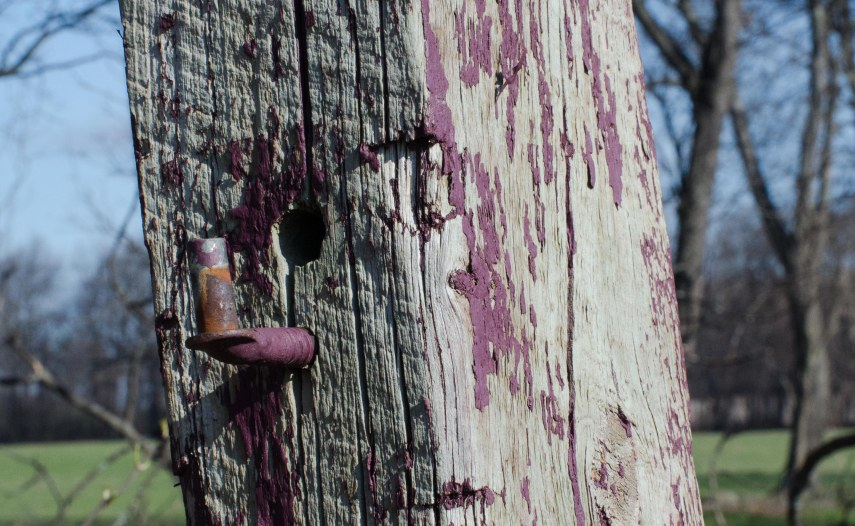 Fence post with round hole & pipe - once painted purple. Notice the saw marks.