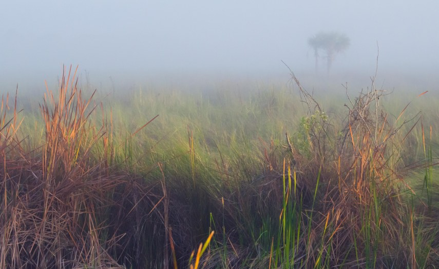 morning everglades 040