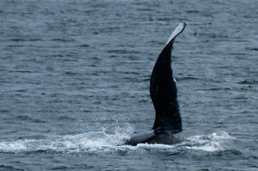 whales 061