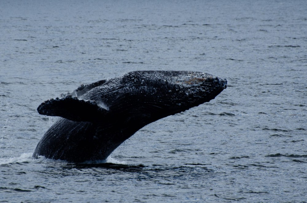 whales 092