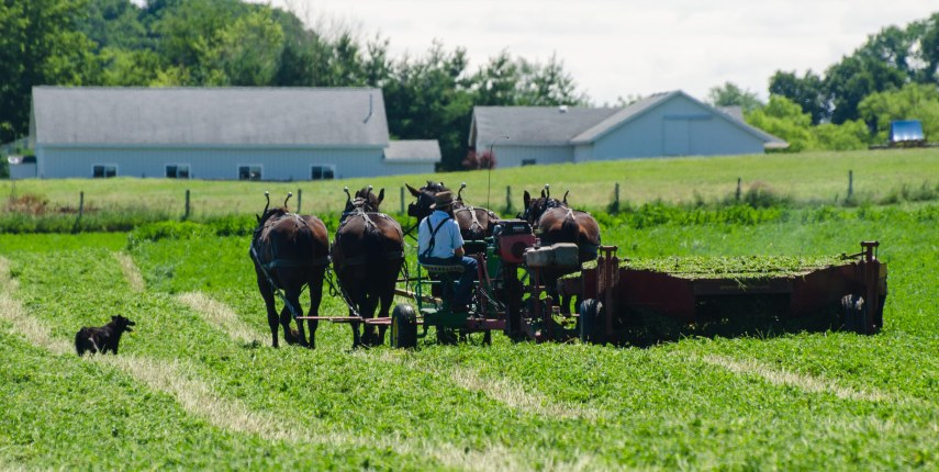 Amish 118