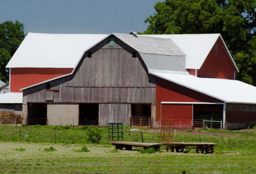 Amish 219