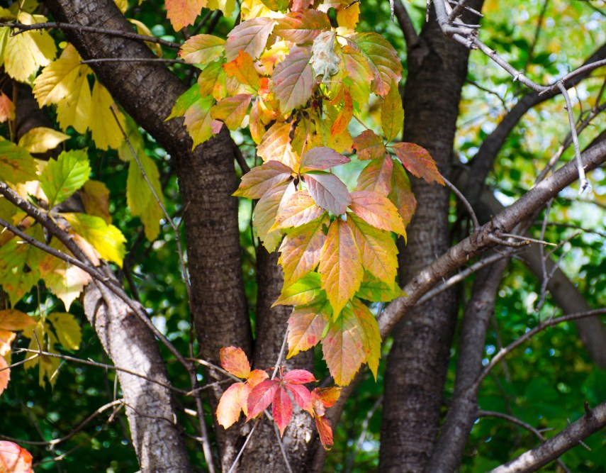 fall leaves 002