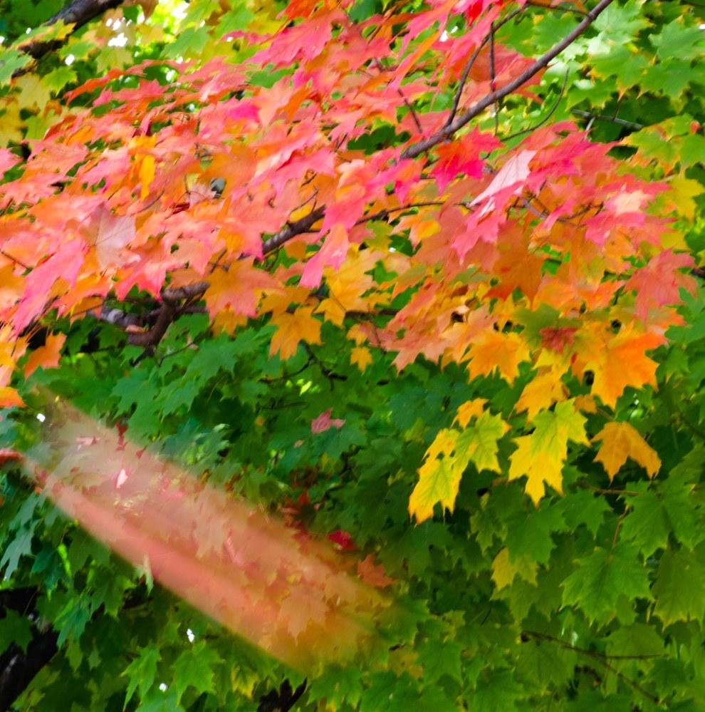 fall leaves 013