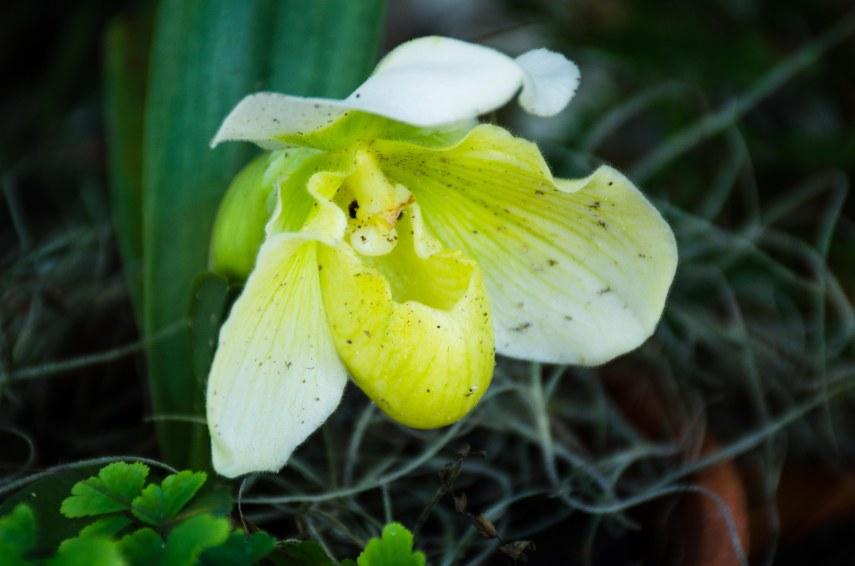 botanical gardens 035-2