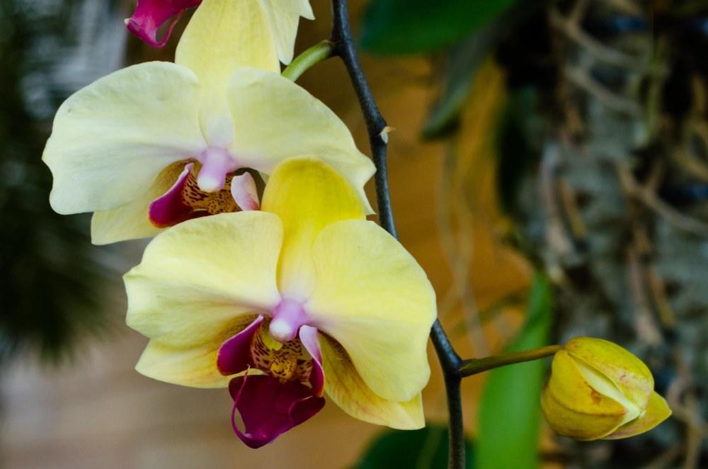 botanital gardens 027-2