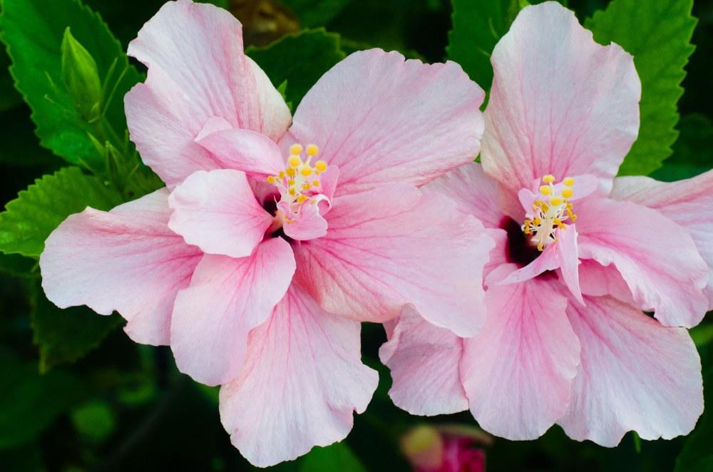 flowers 011-2