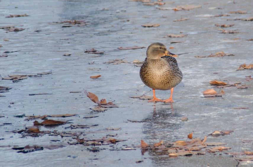 MSU Bird Sanctuary 008-2