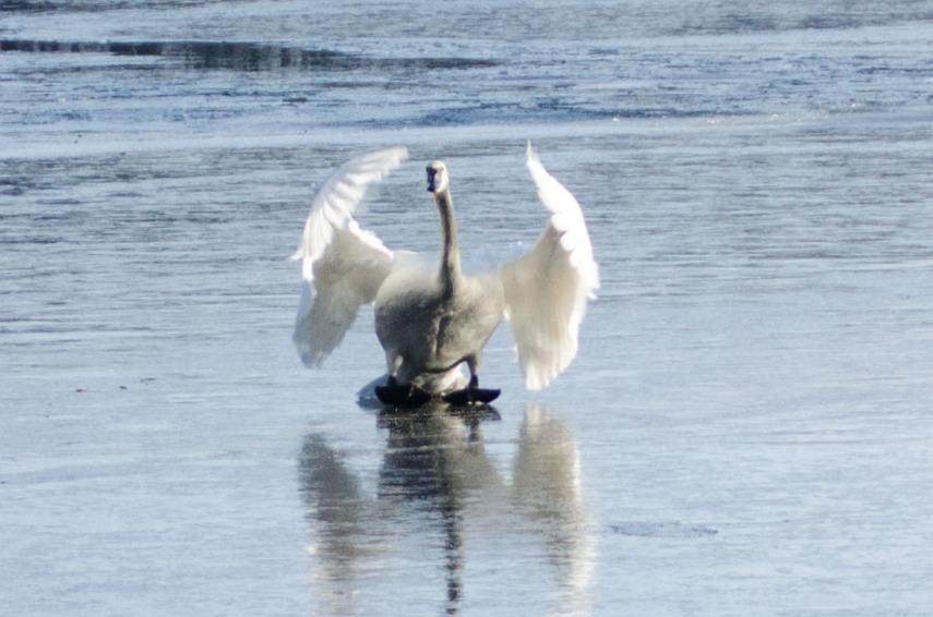 MSU Bird Sanctuary 078-2