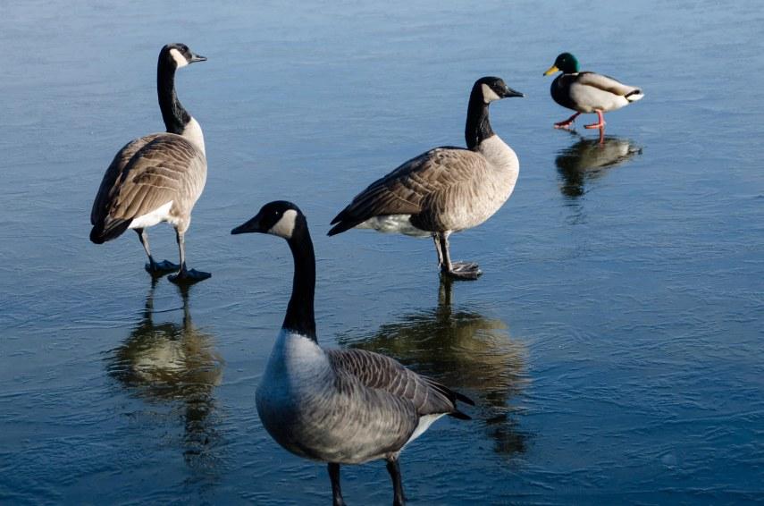 MSU Bird Sanctuary 115-2